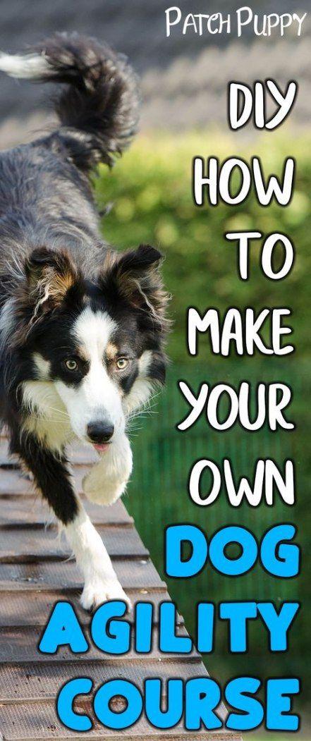 Best Diy Dog Training Course Ideas Diy Aggressive Dog Dog Agility Course Dog Agility