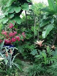Resultado De Imagen Para Subtropical Garden Design