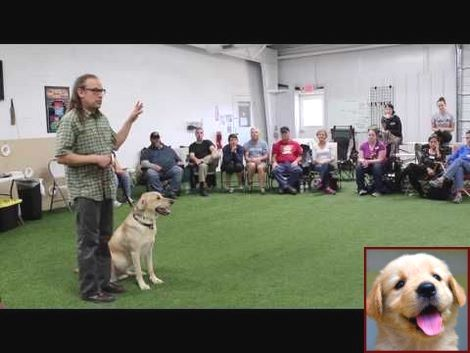 House Training A Newfoundland Puppy And Dog Training Classes Grand