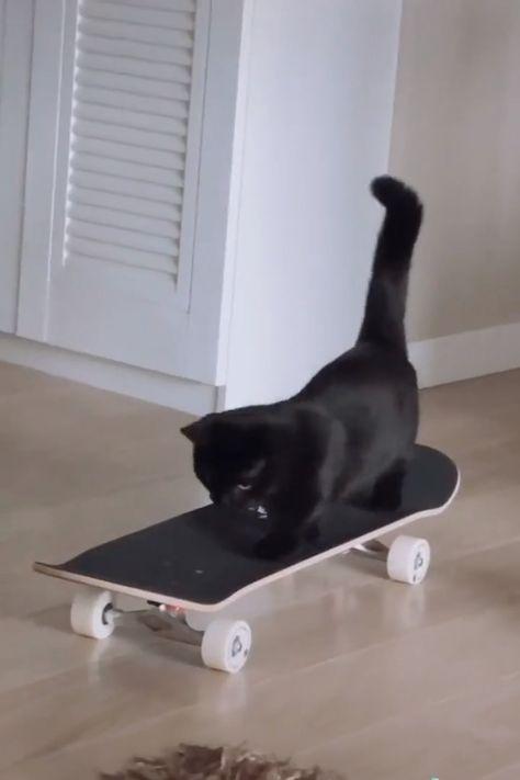 Smart cat learning skateboard 😺😁👍 #cats #smartcats #cuteanimalshare #cutecats #smartpets #smartanimals
