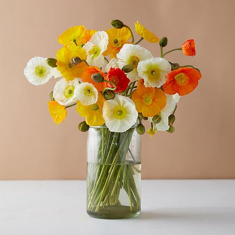 Fresh Bouquets + Flowering Plants | Colorful Blooming Gifts for Every Season - Terrain