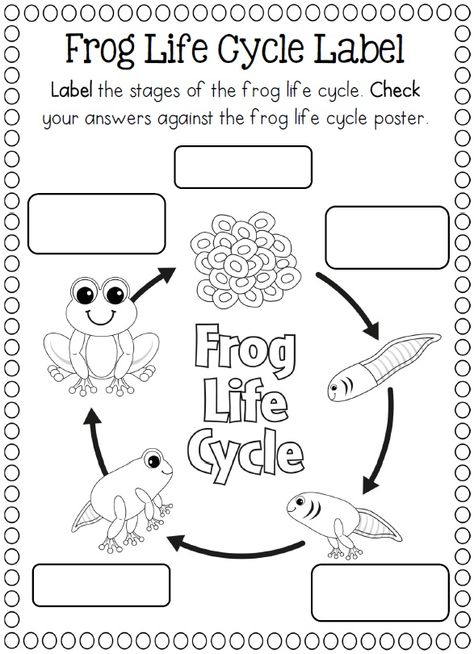 Life Cycles Frog Activities Life Cycles Kindergarten Science