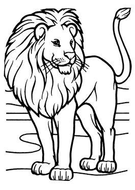דפי צביעה חיות אריות Lion Coloring Pages Animal Coloring Pages Lion Pictures