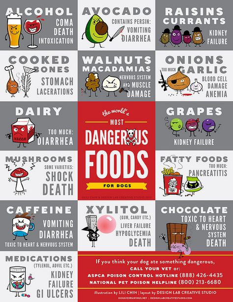 The World's Most Dangerous Foods For Dogs. #Dog #Canine #Pet #Veterinarian #Diet #Infographic by Lili Chin