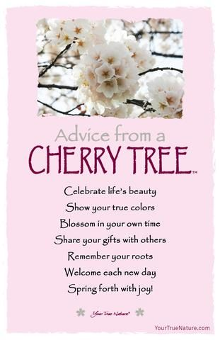 Each Art Card Says Advice From A Cherry Tree Celebrate Life S Beauty Show Your True Colors Blossom In Your Blossom Quotes Cherry Quotes Cherry Blossom Quotes