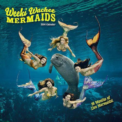 The 16-month, 2014 Weeki Wachee Mermaid calendar is now available