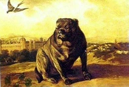 carlino tigrato in pittura