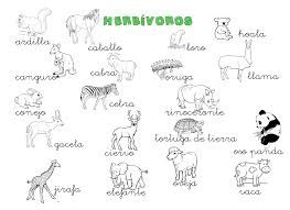 Animales Herbivoros Carnivoros Y Omnivoros Para Colorear Busqueda De Google Animales Herbivoros Herbivoros Animales Carnivoros
