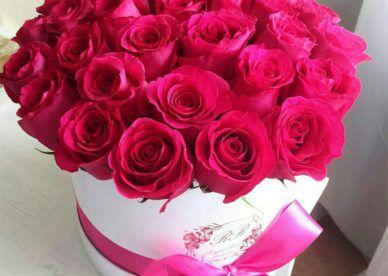أجمل صور ورود الحب للعشاق عالم الصور Rose Flowers Plants