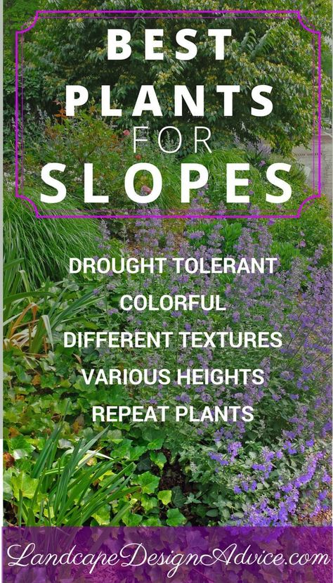 hillside landscaping Great success with planting a slope has to do with the types of plants you use. Here are some great tips, ideas and photos. For low maintenance, be sure to use drought tolerant plants! Terraced Landscaping, Landscaping On A Hill, Landscaping Tips, Landscaping Software, Sloped Backyard Landscaping, Luxury Landscaping, Steep Hillside Landscaping, Steep Backyard, Hydrangea Landscaping