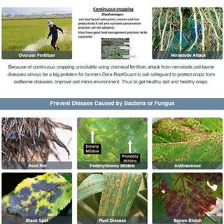 Green Solution To Control Soil Borne Dieases Dora Rootguard