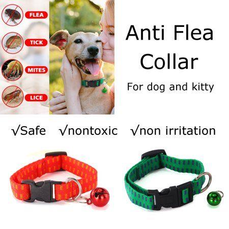 Pets Cat Fleas Fleas Ticks