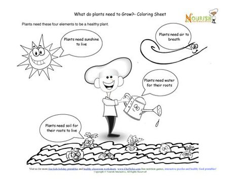 Teaching children the elements required to grow healthy food plants coloring page.
