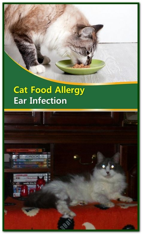 Cat Food Allergy Ear Infection With Images Cat Food Allergy