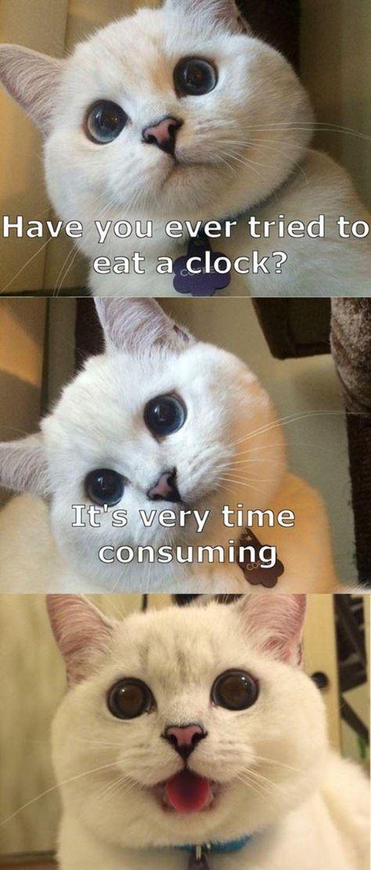cute catcat-overload.tumblr.com source: http://i.imgur.com/LZG597V.jpg