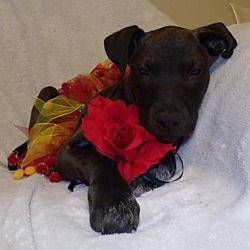 Sanford Fl Terrier Unknown Type Medium Meet Cayenne F A