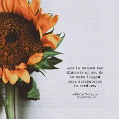 La Imagen Puede Contener Flor Con Imagenes Frases Girasoles
