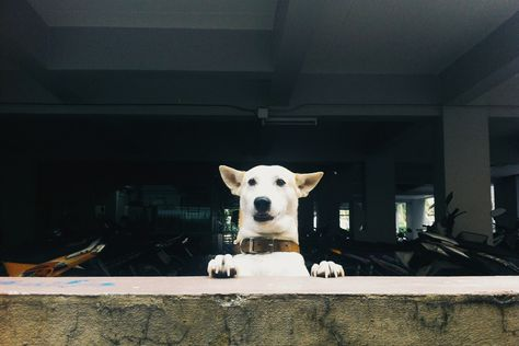 Best Gluta Dog Images On Pinterest Happy Dogs Beat - Meet gluta the smiling dog that beat cancer