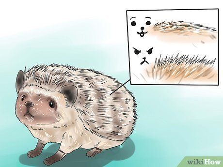 How To React When Your Hedgehog Bites You Hedgehog Pet Cage Hedgehog Pet Hedgehogs Pet Care