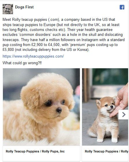 Meet Rolly Teacup Puppies Com A Company Based In The Us That Ships Teacup Puppies To Europe Dogsfirst T Cute Baby Animals Teacup Puppies Cute Animals