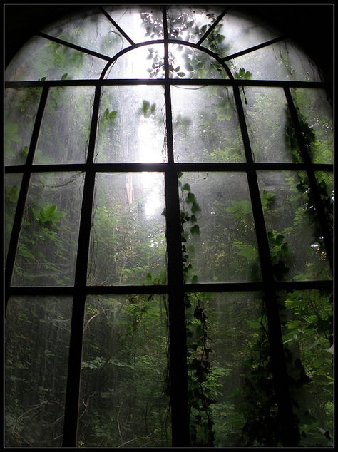 I am resting in a abandoned mansion. I see the moonlit mist in the forest. I hear the sound of wolves howling. I fall asleep watching the misty forest through a large window. Dark Green Aesthetic, Nature Aesthetic, Aesthetic Pastel, Bohemian House, Dark Bohemian, Slytherin Aesthetic, Home Photo, Abandoned Places, Abandoned Library