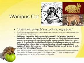 Wampus Cat Cats Mam