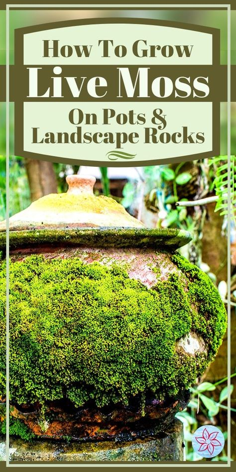 How To Grow Live Moss On Pots And Landscape Rocks