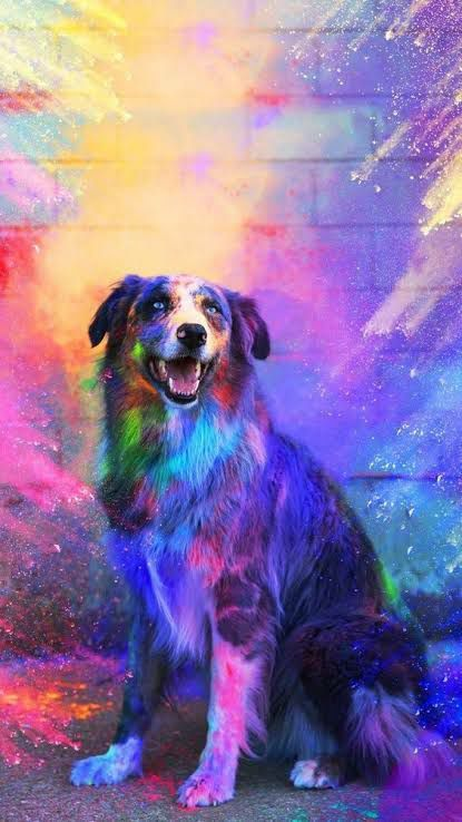Pin On كنخ Best wallpapers cute dogs