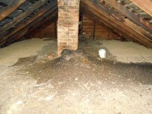 How Dangerous Are Bat Droppings Bat Droppings Are A Bad Thing To Have Around Because They Are A Source Of Diseases That Will Affect O Bat Dangerous Bat Guano