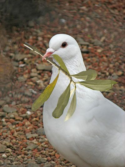 Pin By Cynthia Reece The Purple Iris On Tweet Tweet In 2020 Animals Beautiful Pigeon Pictures Beautiful Birds