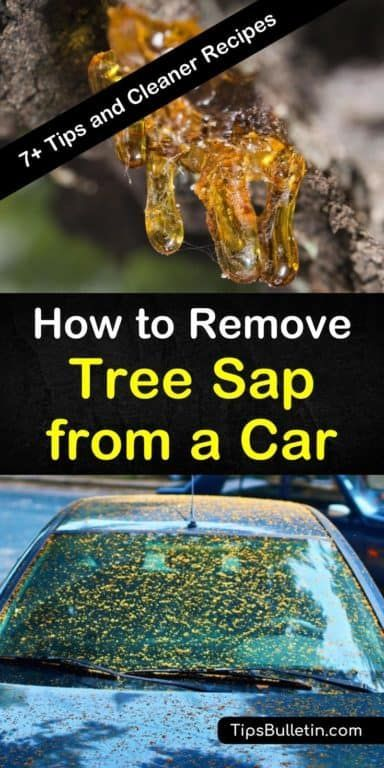 7 Amazing Ways To Remove Tree Sap From A Car Remove Tree Sap