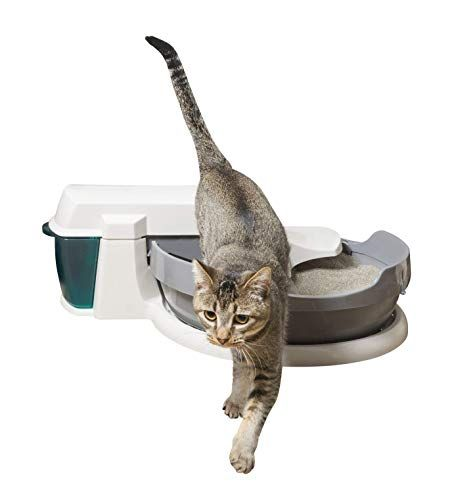 10 Best Automatic Cat Litter Boxes In 2020 Cat Litter Box Automatic Cat Litter Cat Litter