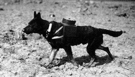 Animals In World War One 1914 1918 World War One World War War