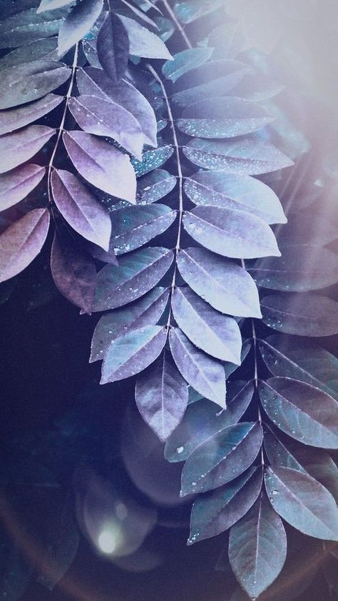 30+ Super Pretty Wallpaper Backgrounds For iPhone You'll Love