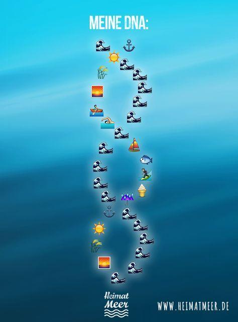 Die DNA eines Küstenkind's! >>