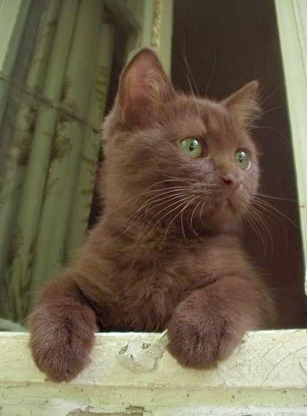 Ah Beautiful Cats For Sale In Pakistan Follow Pretty Cats