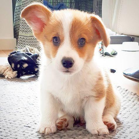 ✔ Cute Puppies Funny Doggies #cutegirls #cuteboys #cutepuppies