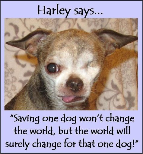 Let's put an end to puppy mills!!