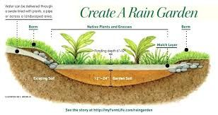 Image result for rain garden plants ohio zone 5 | Rain ... on garden designs zone 6, garden designs zone 7, garden designs zone 3,