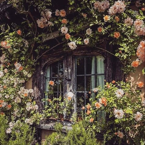 The Happy Cottage Spring Aesthetic, Nature Aesthetic, Witch Aesthetic, Different Aesthetics, Cottage In The Woods, Cottage Style, Aesthetic Pictures, White Flowers, Forest Flowers