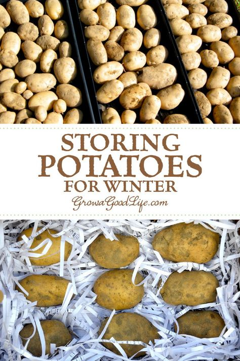 Storing Potatoes for Winter: Take advantage of the cool areas in your home such as an unheated garage basement or closets to store potatoes. Here are five easy steps to store potatoes all winter. How To Store Potatoes, Storing Potatoes, Planting Potatoes, Canning Food Preservation, Preserving Food, Growing Vegetables, Fruits And Veggies, Winter Vegetables, Potato Storage