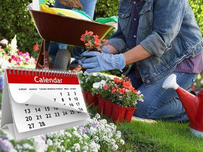 Jakie Kwiaty Sadzimy W Maju Garden Outdoor Decor Outdoor