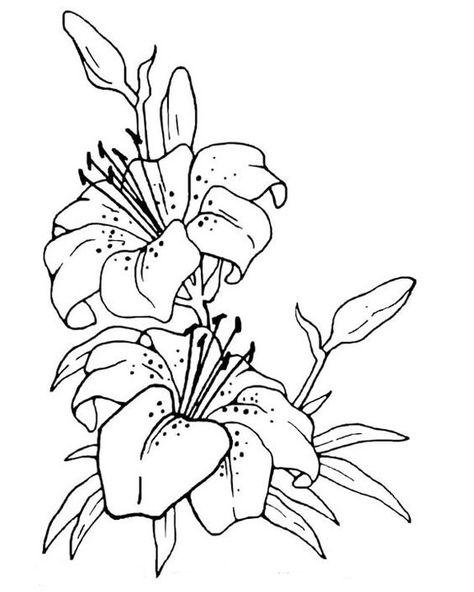 11 lilienideen  lilien zeichenvorlagen blumenzeichnung
