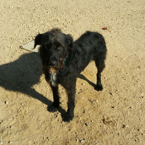 Labradoodle Dog For Adoption In Maquoketa Ia Adn 499424 On Puppyfinder Com Gender Male Age Young Labradoodle Dogs Dog Adoption Labradoodle