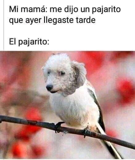 Pin De Vivebien En Firulais Funny Fotos De Animales Memes Divertidos Chiste Meme