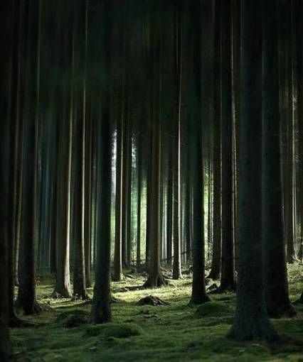 Photography Ideas Landscape Forests 64 New Ideas Photography Landscape Photography Trees Landscape Photography Nature Photography