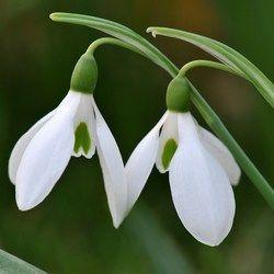 High Quality Love Bracelet In 2020 Bulb Flowers Plants Buy Plants