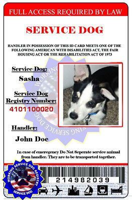 Service Dog Animal Id Ada Service Dog Id Card Customization Dog