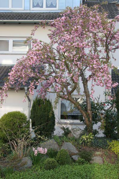 Blühende Bäume Für Kleine Gärten
