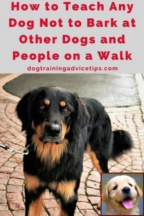 House Training A Puppy Youtube And Clicker Training Dogs Tricks
